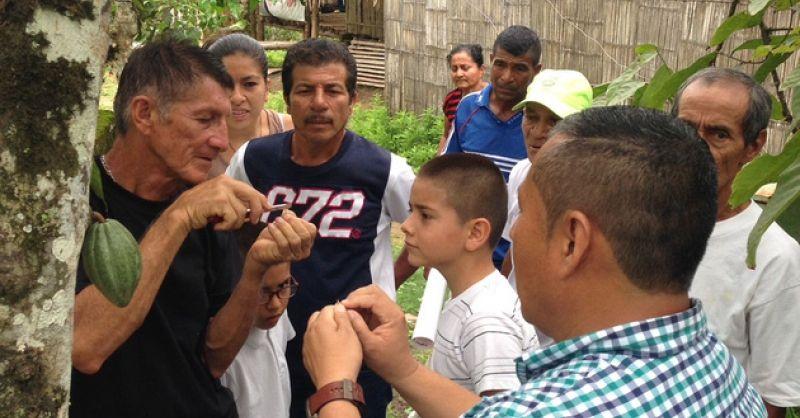 Enten van cacaobomen in Bajo Grande - Ecuador