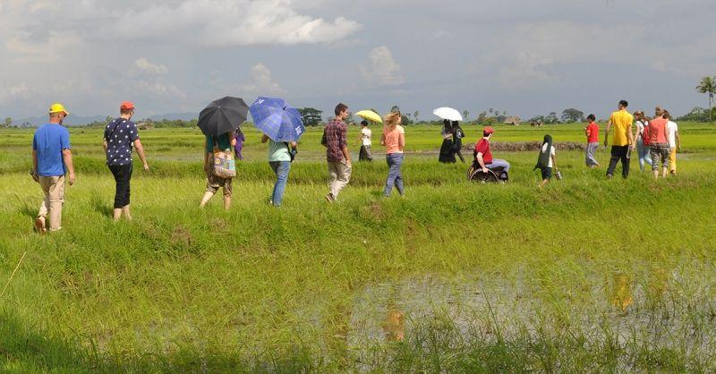Zondagmiddagwandeling door een rijstveld