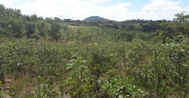 Aangeplante boompjes tegen erosie