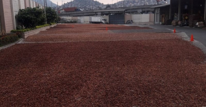 Cacao drying at the floor