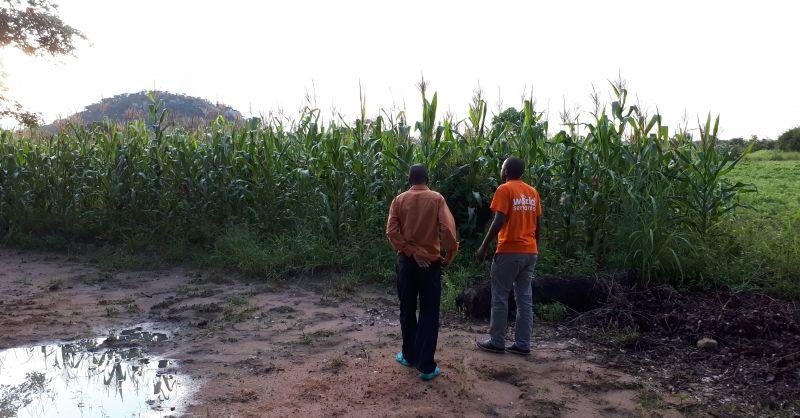 Musssa en head teacher voor het maisveld van het SFP