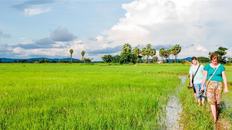 Wandeling langs de rijstplantage