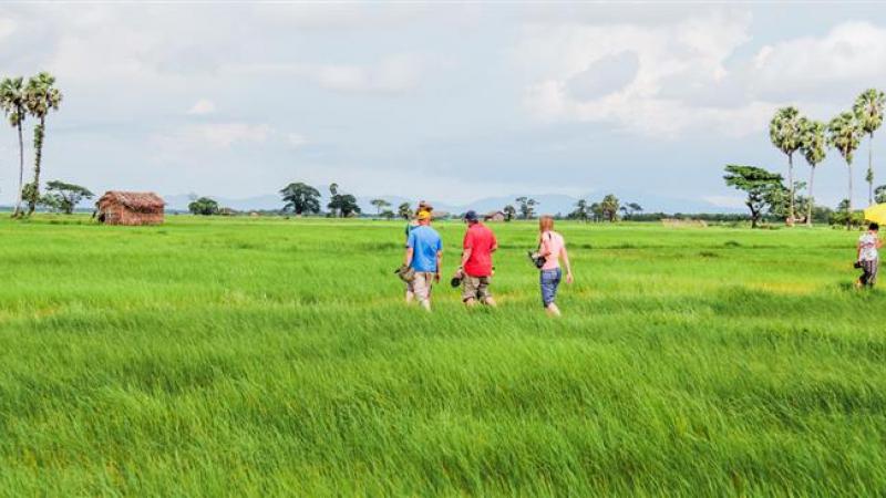 Door de rijstvelden
