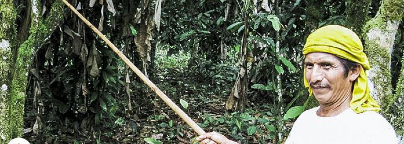 Cacao plukken