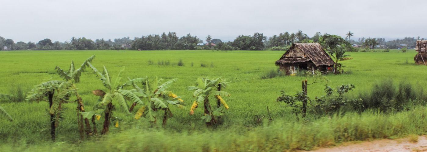 Help je mee op de rijstplantages?