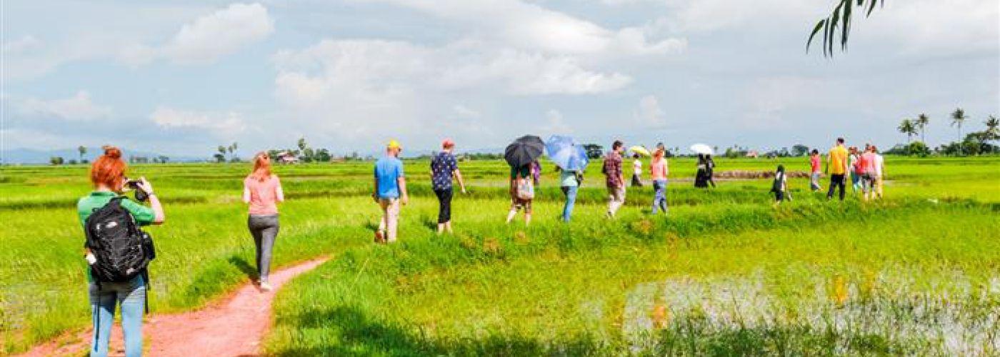 Wandeling door de rijstvelden