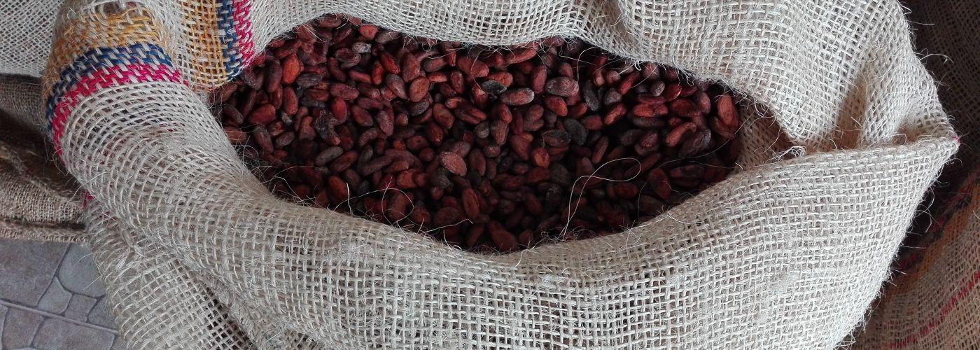 Een zak vol cacao klaar voor de verkoop