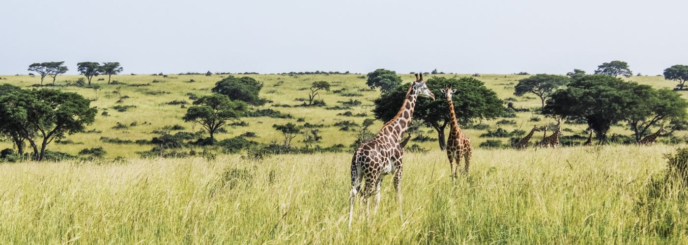 Spot jij ze straks op safari?