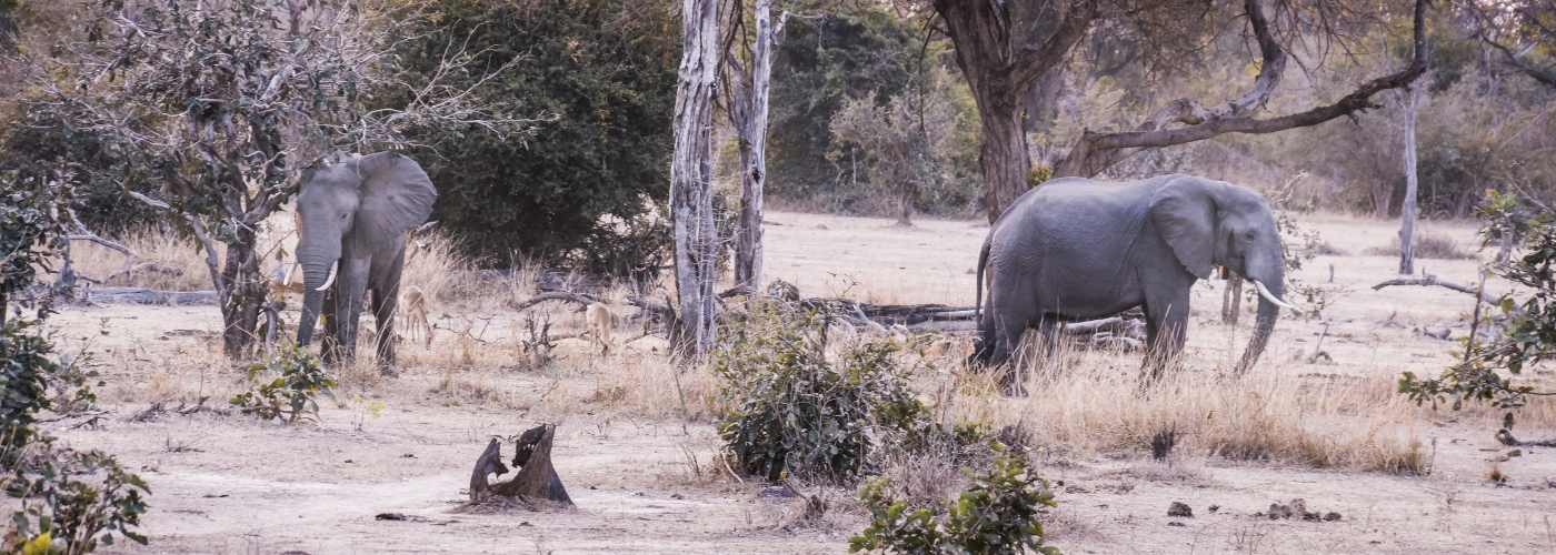 Olifanten spotten